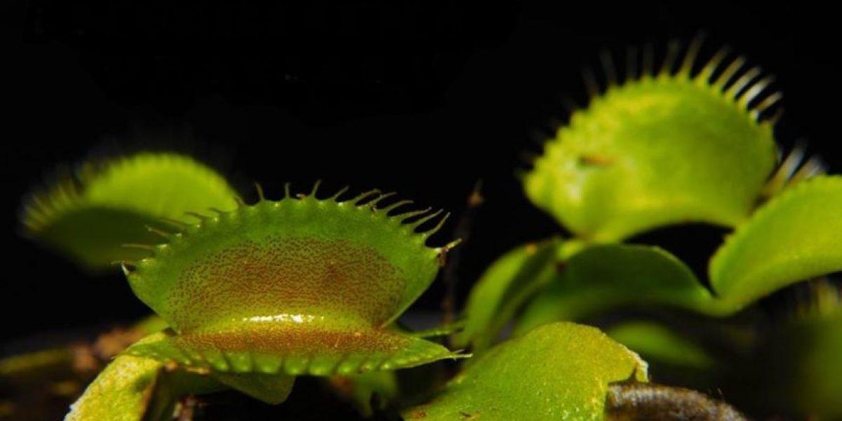 Adopta una planta carnívora, lema de una exposición natural en Barranquilla