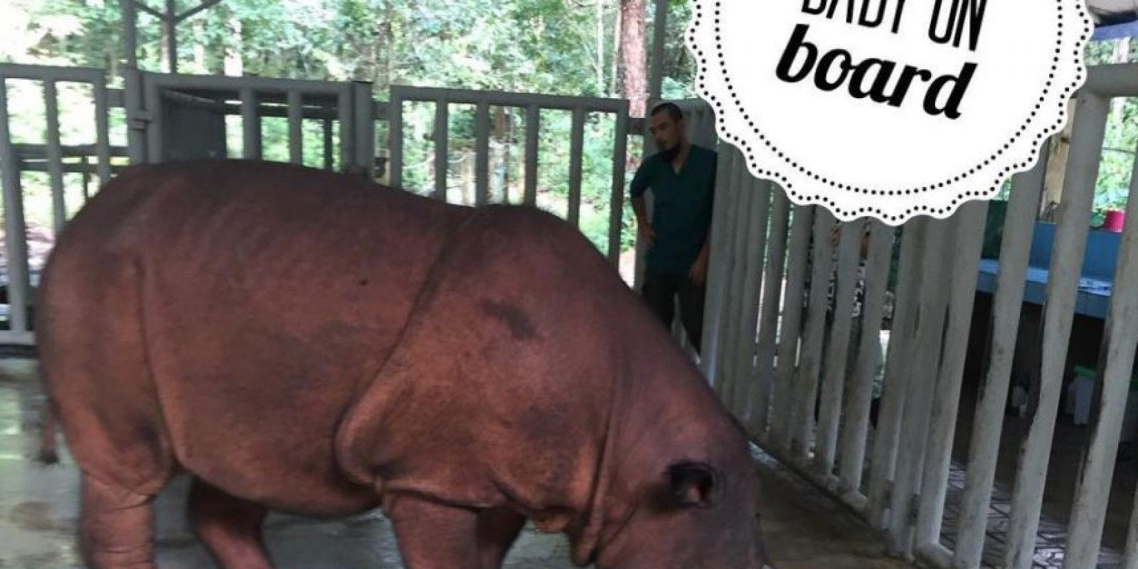 El registro fósil indica que esta especie ha permanecido prácticamente invariable. Foto:instagram.com/rhinosirf/