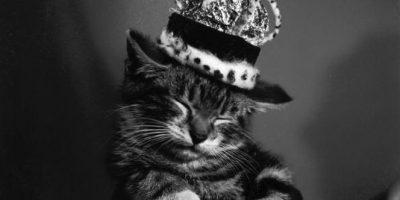 Ver videos y fotos de gatos: uno de los comportamientos más populares en Internet Foto:Getty Images
