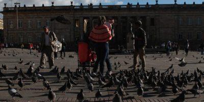 Atraen las palomas con el maíz. Foto:Archivo Publimetro