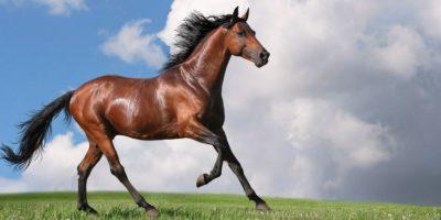 Las coces de los caballos pueden matar a una persona ahí mismo. Foto:vía Wikipedia