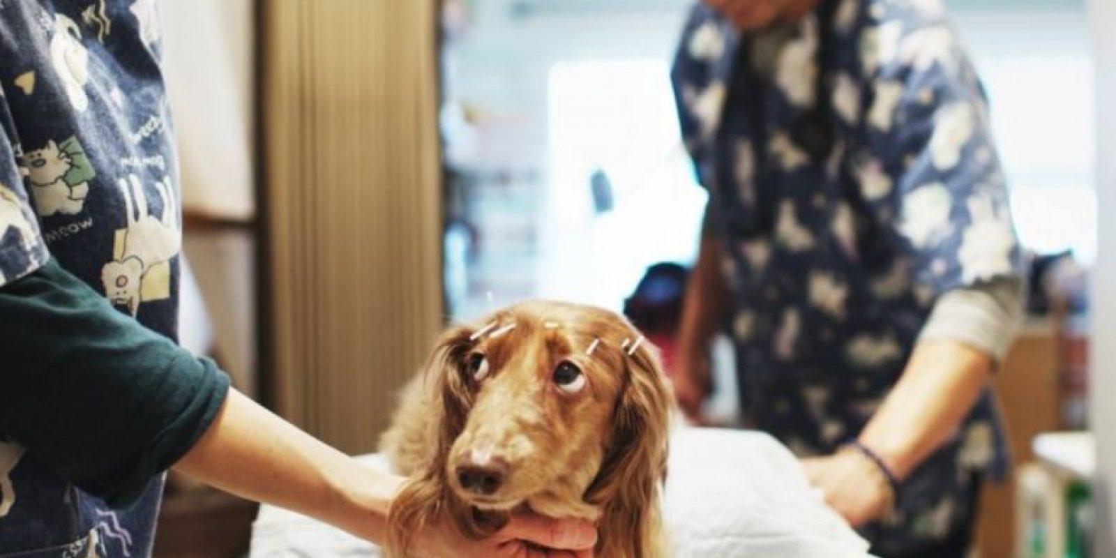 Veterinario – 3.8% Foto:Getty Images