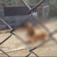 Franco Luis Ferrada, de Chile, trató de matarse lanzándose ante dos leones Foto:vía Youtube