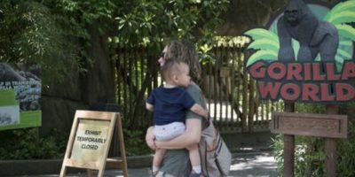 Harambee fue sacrificado cuando estaba al lado de un niño de cuatro años que cayó en su fosa en el Zoológico de Cincinatti. Foto:vía AP