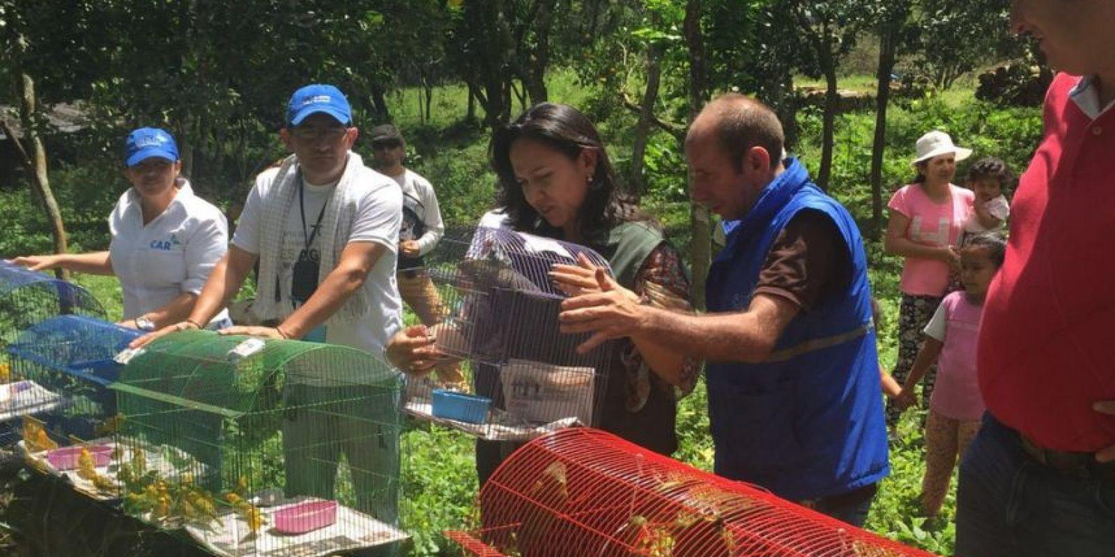 Foto:Secretaría de Ambiente