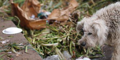 Los perros también buscan que comer Foto:Sofía Toscano-Publimetro