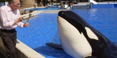 Los desechos humanos que la ballena ingirió pudieron haber contribuido a su muerte. Foto:Facebook.com/OrcaPlett