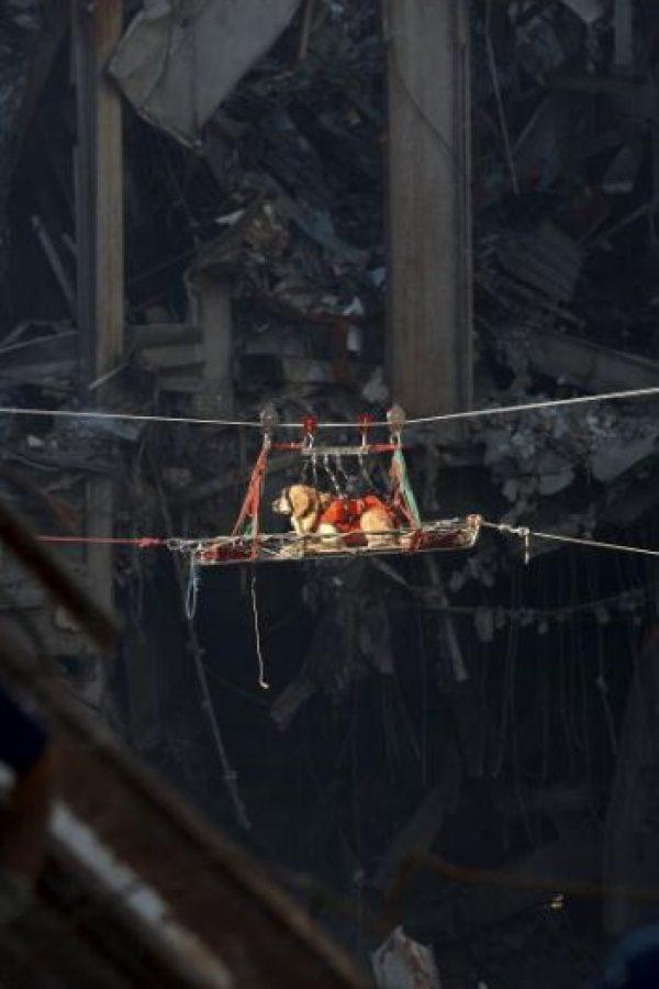 Durante las labores de rescate del 11 de septiembre de 2001, fueron utilizados perros Foto:Getty Images