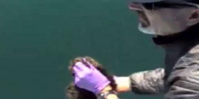 El biólogo esperó para lanzar a la nutria. Foto:Marine Mammal Center