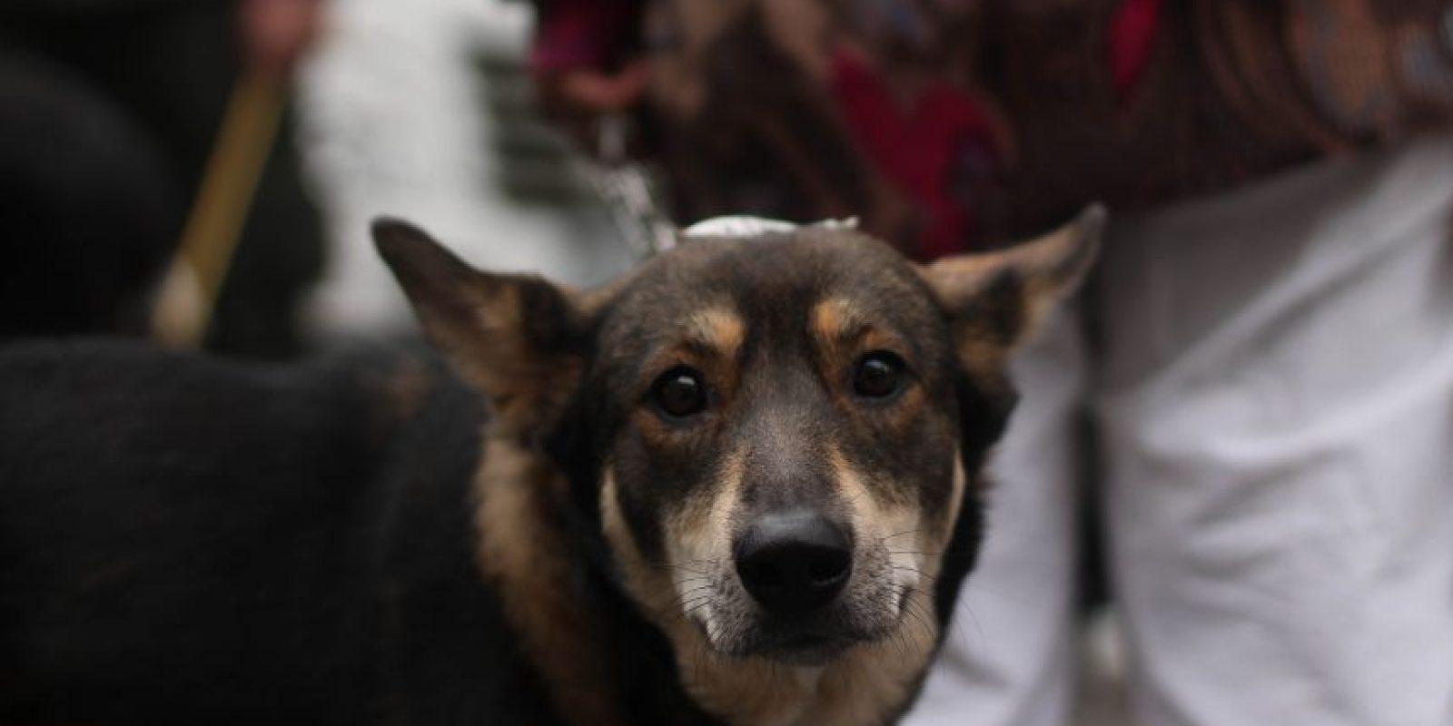En la jornada, los animales fueron esterilizados y vacunados. Foto:Sofía Toscano-Publimetro