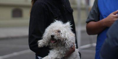 Perros de todas las razas participaron en la jornada. Foto:Sofía Toscano-Publimetro