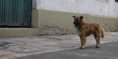 Algunos de los animales son de los habitantes de calle. Foto:Sofía Toscano-Publimetro