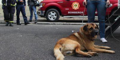 Una esperanza de vida para estos animalitos Foto:Sofía Toscano-Publimetro