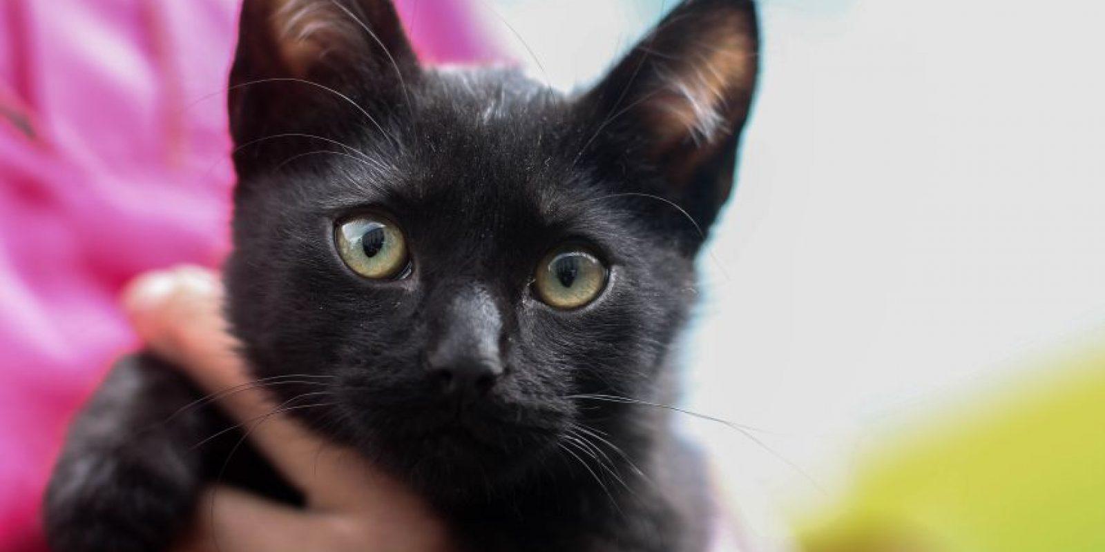 """Los gatos eran """"dueños"""" del Bronx y aunque ha sido difícil rescatarlos por su naturaleza, algunos ya encontraron su hogar. Foto:Sofía Toscano-Publimetro"""