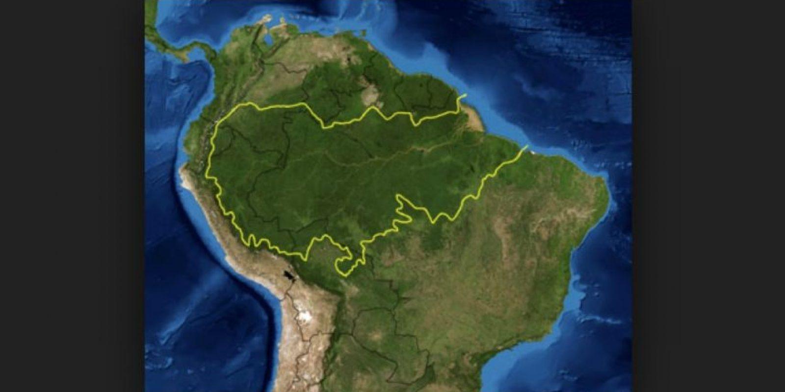 Esta selva amazónica es el bosque tropical más extenso del mundo. Foto:wikipedia.org