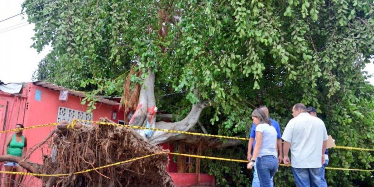 En fotos: así fueron los daños que causó el vendaval en Barranquilla