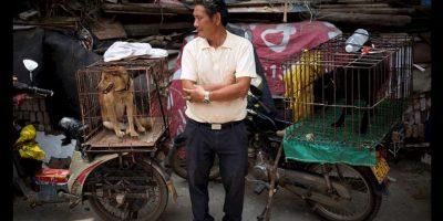 Sin embargo, la demanda de perros ha levantado la polémica. Activistas afirman que es un evento donde la tortura y la violencia contra los animales está presente. Foto:AP