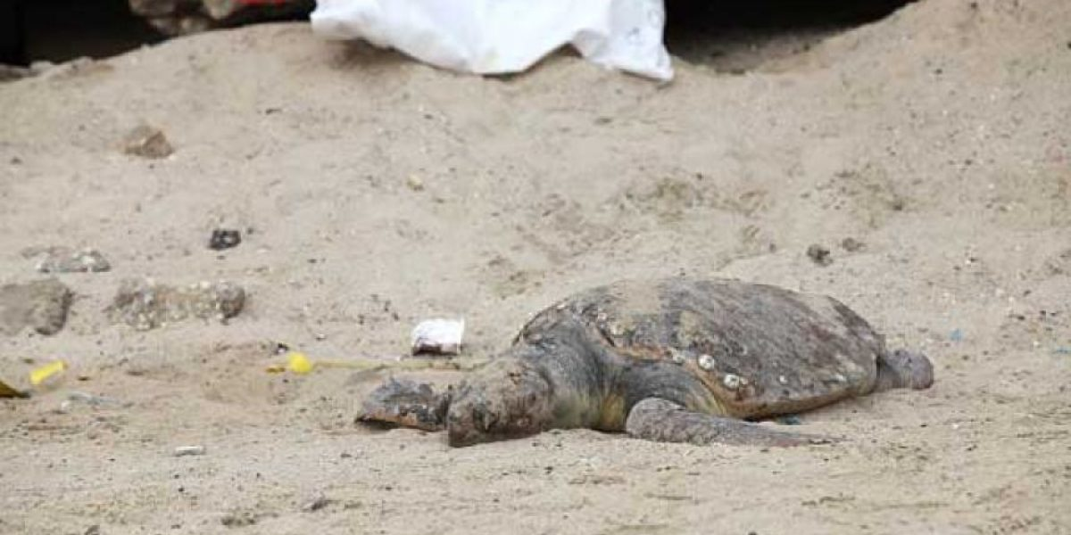 Turistas casi dejan morir a tortuga por tomarse selfies