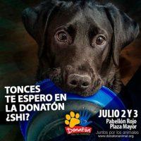 Donatón para ayudar a más de 4000 perros y gatos que necesitan, en Plaza Mayor. Foto:Cortesía Plaza Mayor – Donatón