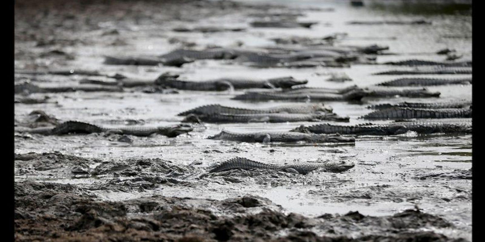 El río Pilcomayo, considerado un santuario para la fauna se está quedando sin agua. Foto:AP