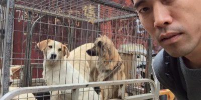 Eran perros que iban a ser desollados vivos Foto:The Animal Hope & Wellness Foundation