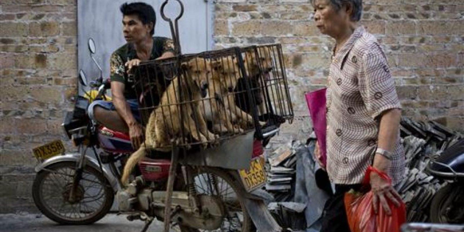 Organizaciones de protección de animales en China reunieron 11 millones de firmas para pedir que no se realizara el festival. Foto:AP
