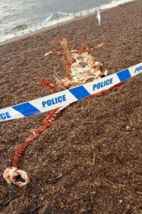 """Los cazadores de monstruos podrían estar de luto por la muerte de """"Nessie"""". Foto:Facebook/Help2RehomeScotland"""