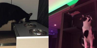 Y hasta incluye espacios donde los gatos de la pareja pueden divertirse, comer y hacer sus necesidades fisiológicas. Foto:LAAB