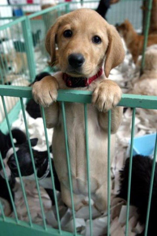 ¿Pueden permitirse económicamente una adopción? Foto:Getty Images