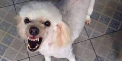 Tal vez esta sea la sonrisa natural de Luki. Foto:Facebook Lucas Duarte.