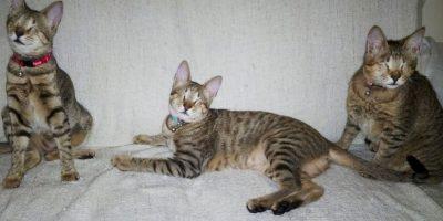 """""""Los Tres MosCATeros"""" Foto:Facebook Three Blind Cats"""