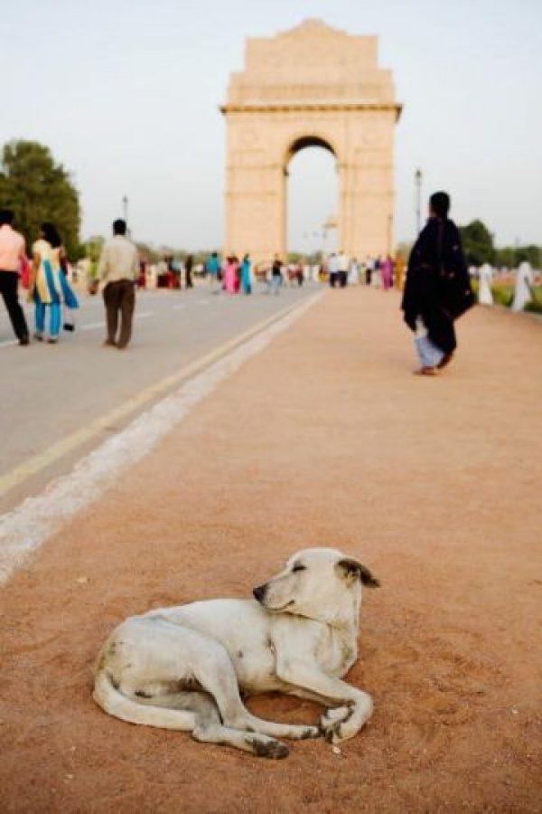 Defensores de los derechos de los animales piden que no queden impunes estos hechos Foto:Getty Images
