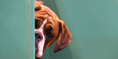También existen iniciativas para educar a la población sobre el cuidado y el registro de sus mascotas. Foto:Getty Images