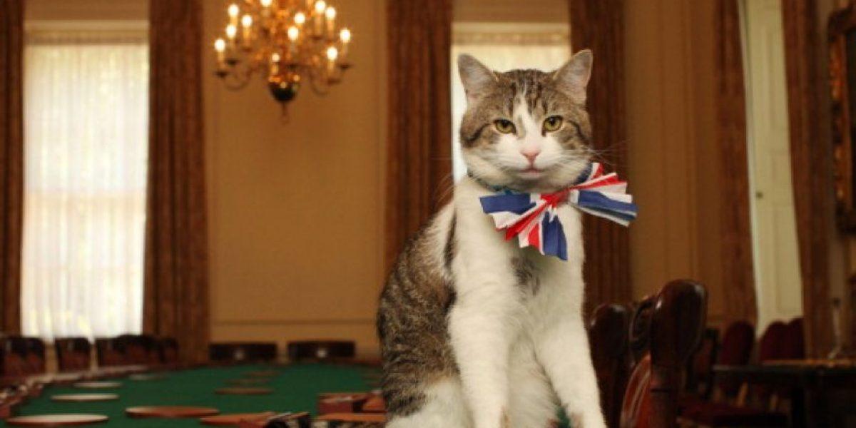 Hombre regaló su herencia para cuidar a los gatos de su ciudad