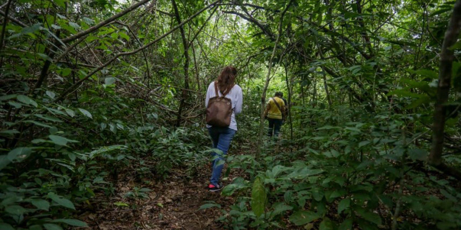 Camino del bosque seco tropical Foto:César Nigrinis Name