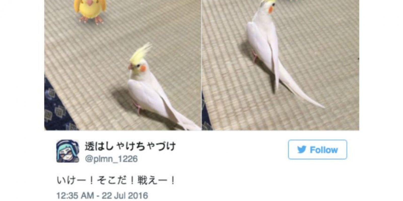 Los japoneses realmente creen que sus mascotas pueden ver a los pokémon. Foto:Twitter