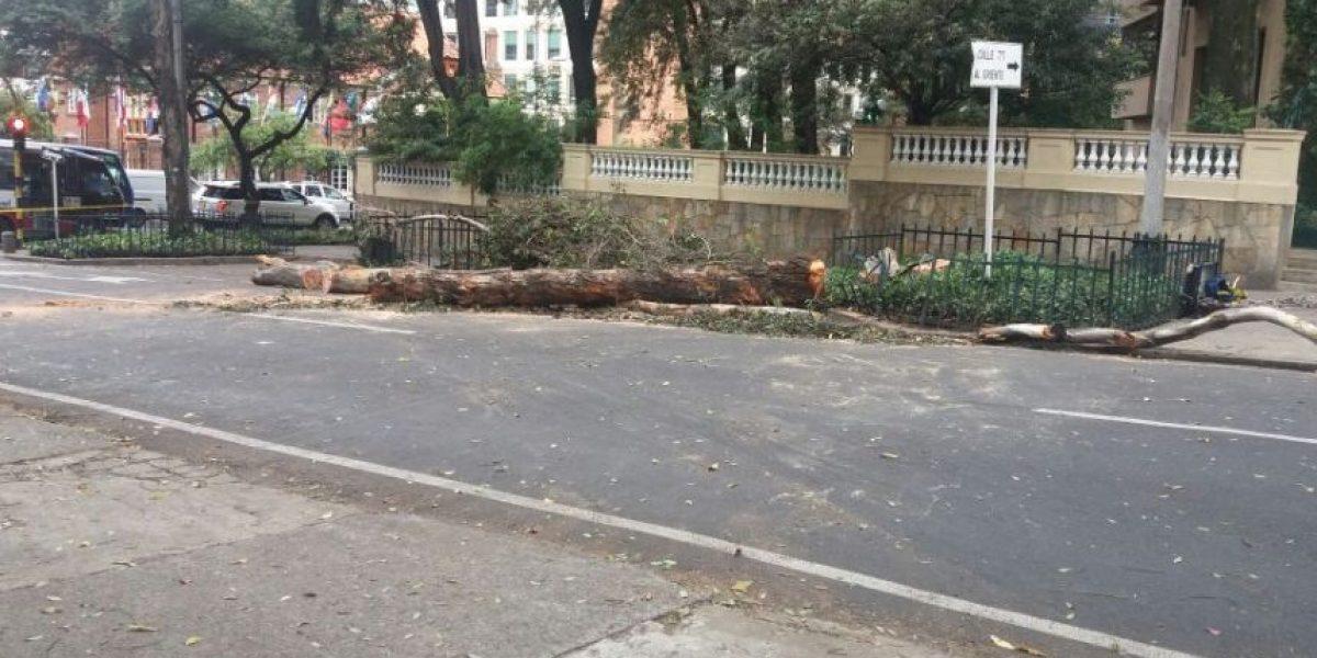 Cierres viales en el norte de Bogotá para tumbar árboles