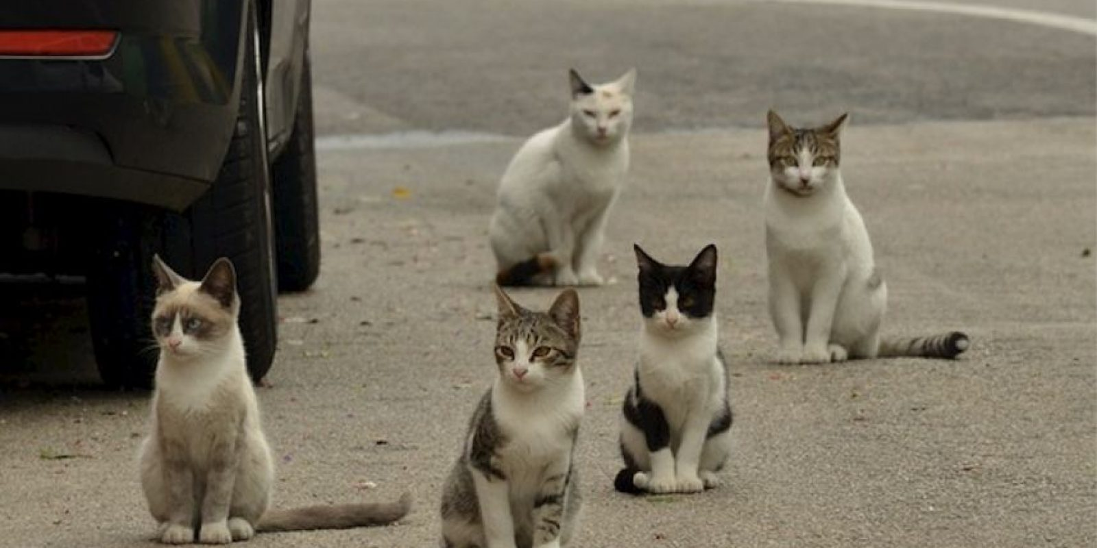 1. Son las mascotas más populares en los Estados Unidos: hay 88 millones de gatos y 74 millones de perros. Foto:Pixabay