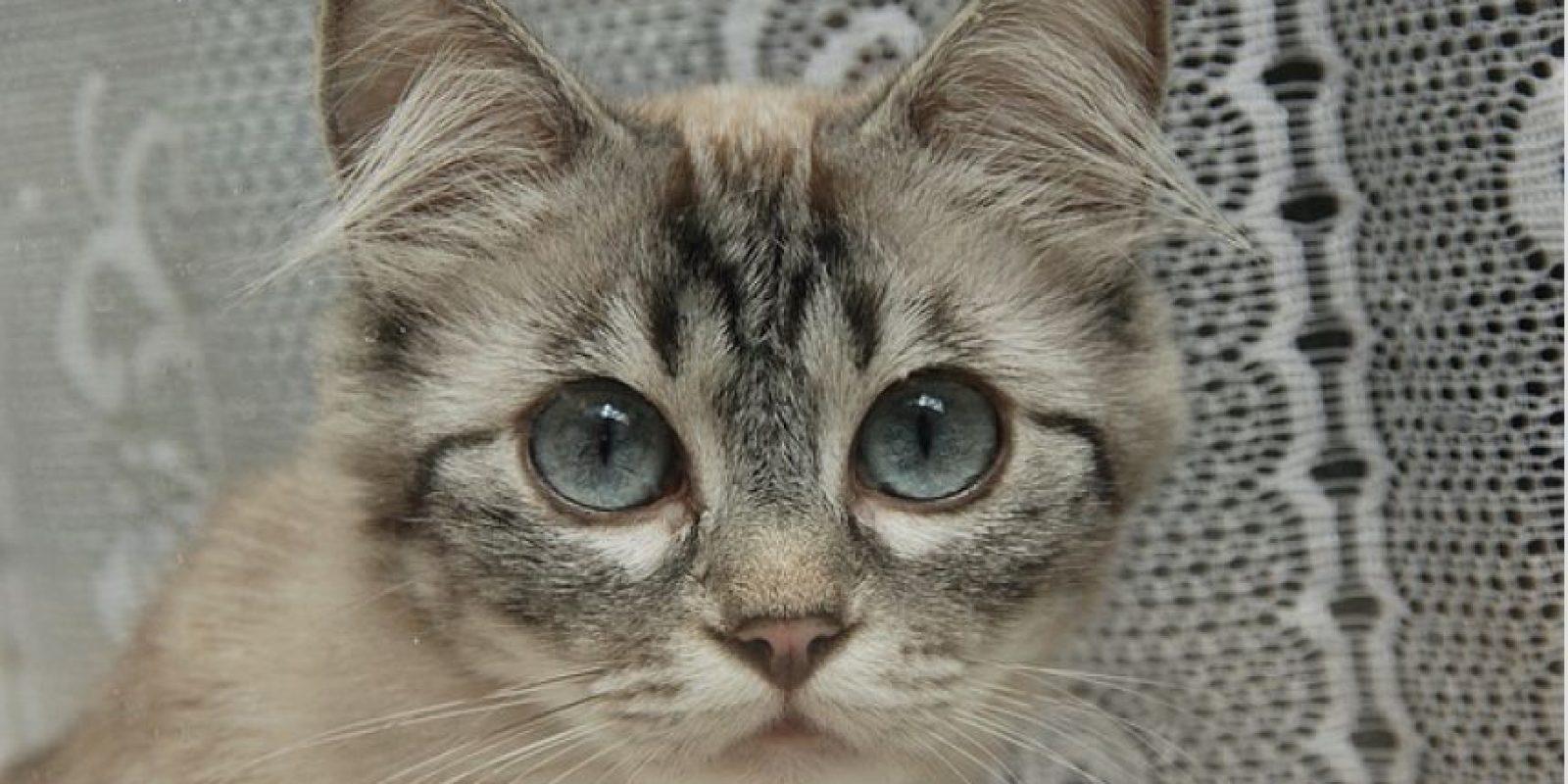 4. El vídeo más viejo de gatos en YouTube se remonta a 1894 Foto:Pixabay