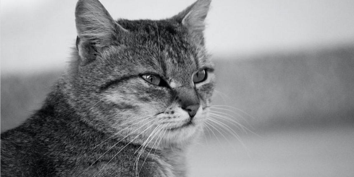 La ciencia explica por qué los gatos le temen a los pepinos