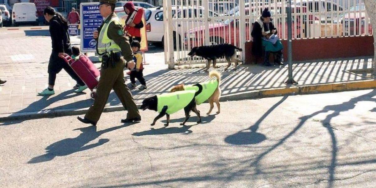 Perros callejeros se convierten en patrulleros policiales