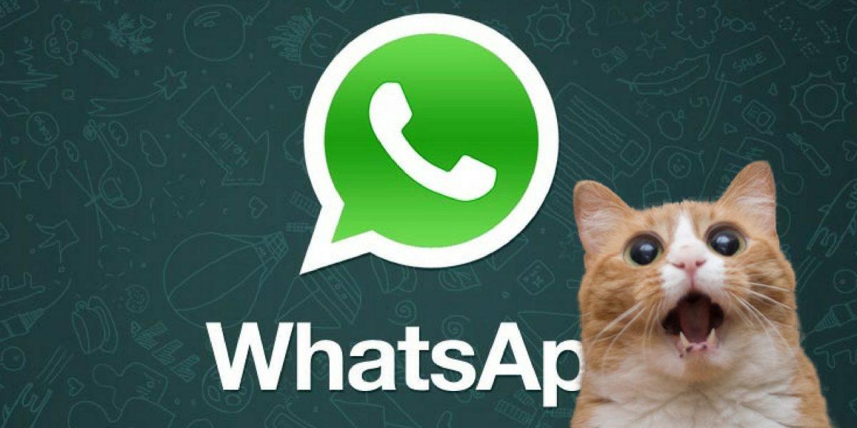 WhatsApp: ¡Por fin! Los usuarios de iOS ya pueden enviar GIFs
