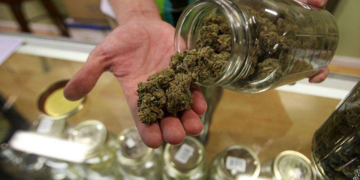 Marihuana, la posible ganadora de las elecciones del 8 de noviembre