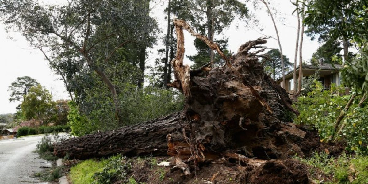 Vivir cerca de un árbol mejora la salud
