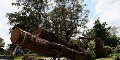 Las regiones deforestadas tienden a una erosión del suelo y frecuentemente se degradan a tierras no productivas. Foto:Getty Images