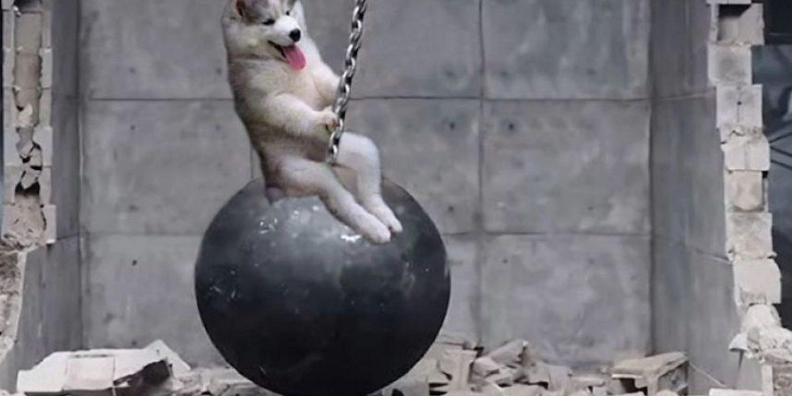Este adorable perrito bebé quedó atrapado en un árbol. La imagen llegó a Internet, y claro, los memes y el Photoshop hicieron lo suyo. Foto:Reddit