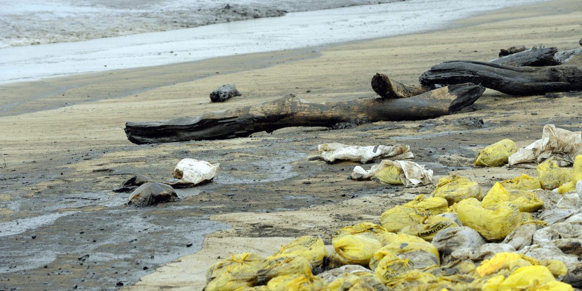 Primeras olas del tsunami llegan a Nueva Zelanda después del temblor