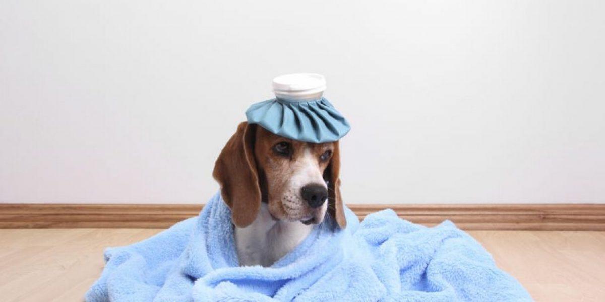 Ozonoterapia nueva terapia alternativa para curar animales