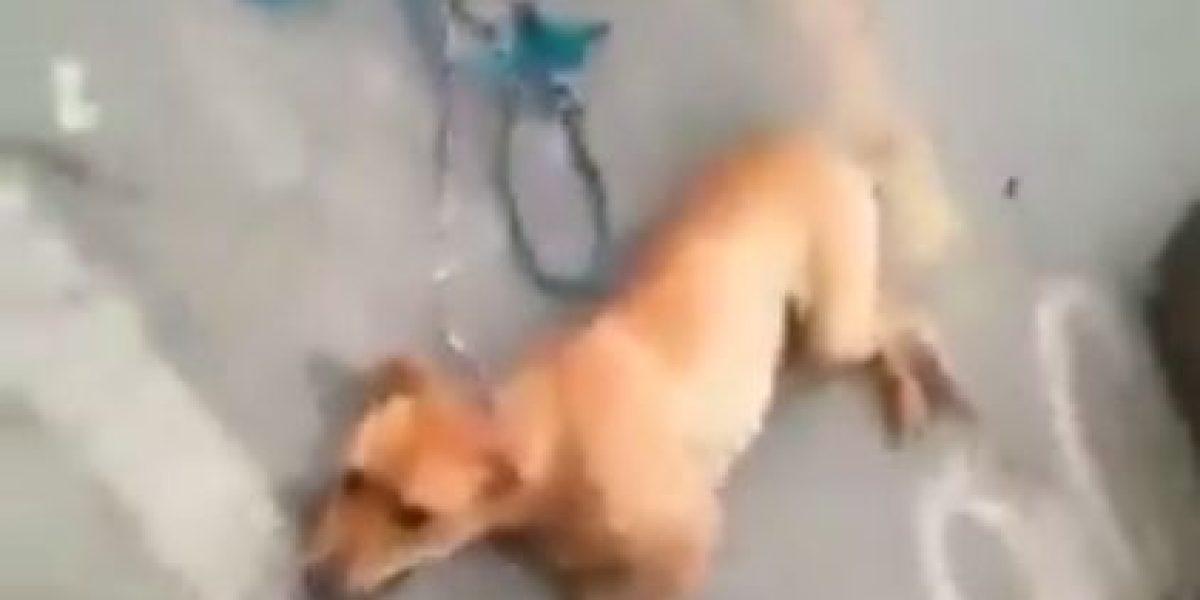 ¡Indignante! En video un motociclista arrastra a un perro por varias cuadras en Antioquia