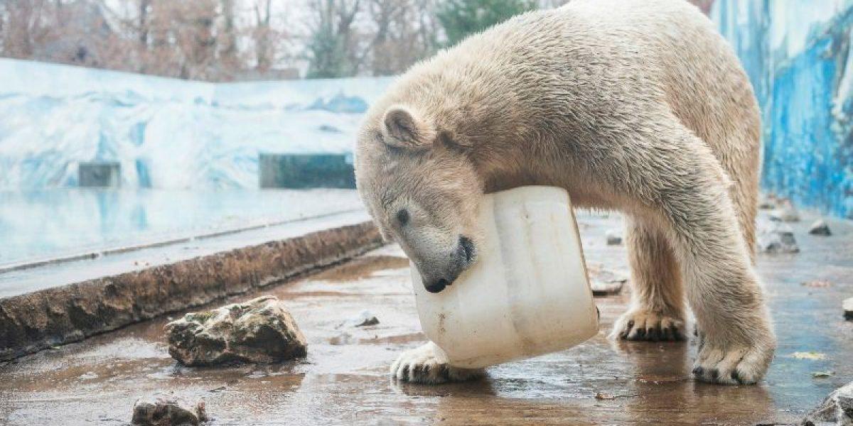 Crean una membrana inspirada en el pelo del oso polar